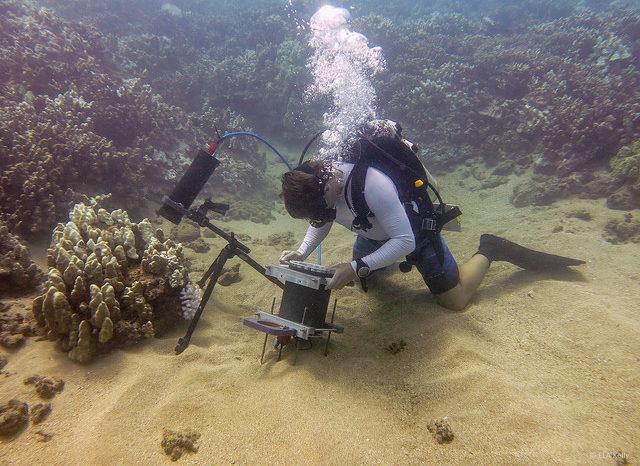 Microscopio revoluciona técnicas de investigación marina