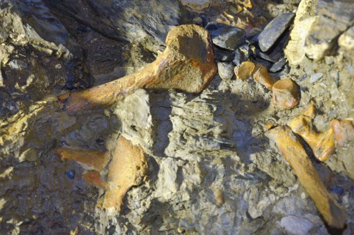 El desafío de investigar el cementerio fósil de Santander