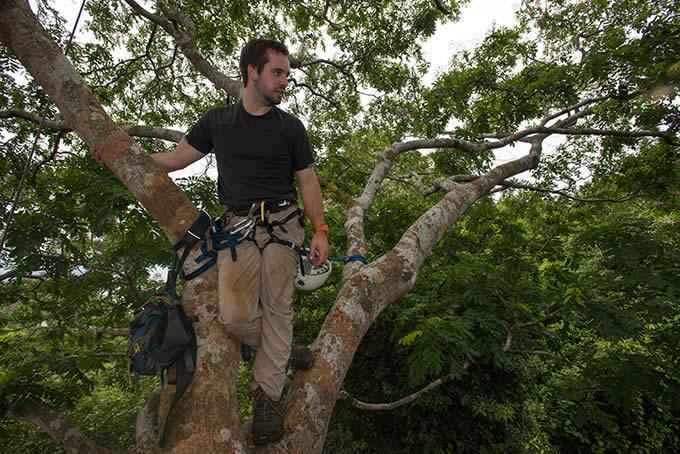 Estudian lianas invasoras de bosques tropicales