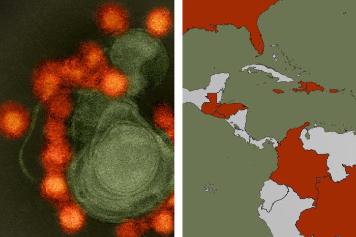 Zika circuló en América antes de que se detectaran los primeros casos