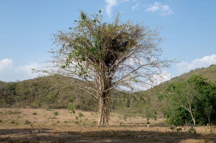 Deforestación pone en riesgo a más de 2900 especies