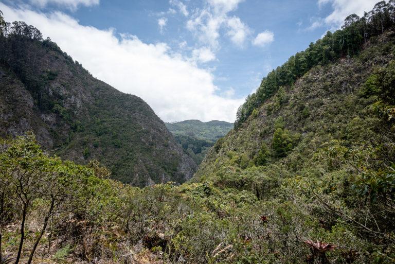 ¿Por qué es vital la recuperación del Bosque Oriental de Bogotá?