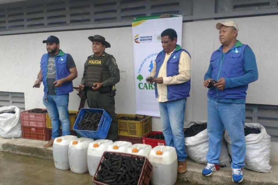 Hallan laboratorio para el tráfico de pepinos de mar, en Sucre