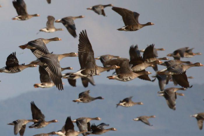 Inestabilidad política y gobernanza débil predicen pérdida de biodiversidad