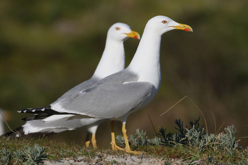 El 80% de los excrementos de las aves marinas están en hemisferio sur