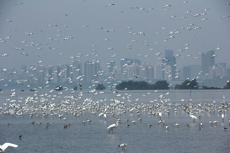 Un llamado al mundo por el futuro de los humedales urbanos
